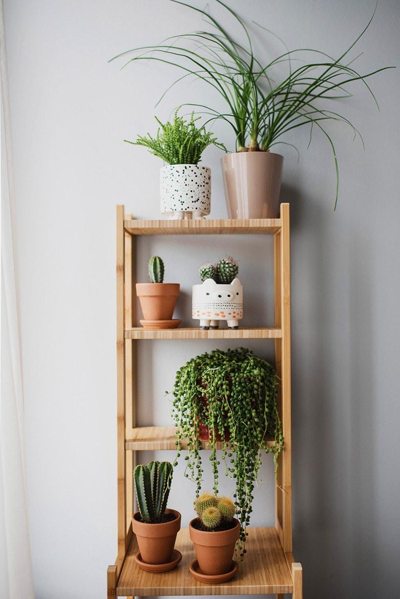 Rośliny dla leniwych: kwiaty doniczkowe, które nie wymagają częstego podlewania