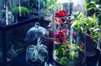 rośliny w słoikach