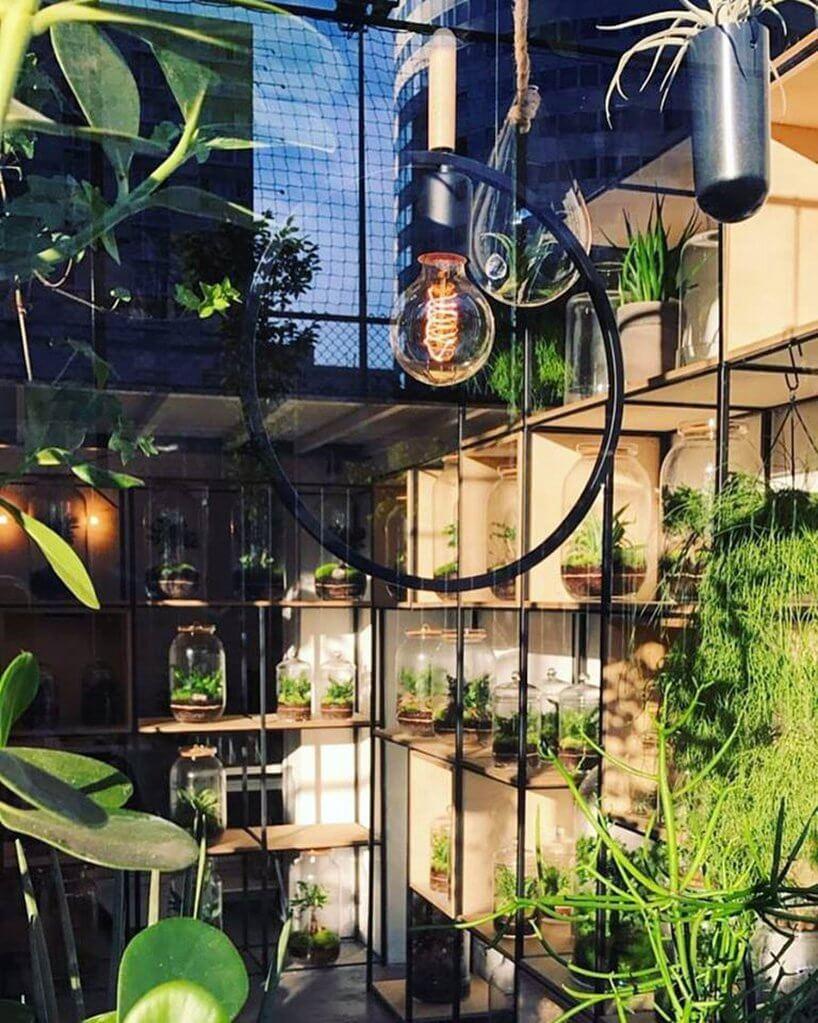 ekspozycja sklepowa roślin zielonych wsłoikach