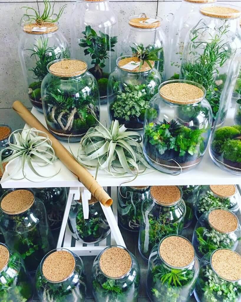 dwie półki sklepowe roślin wsłoikach
