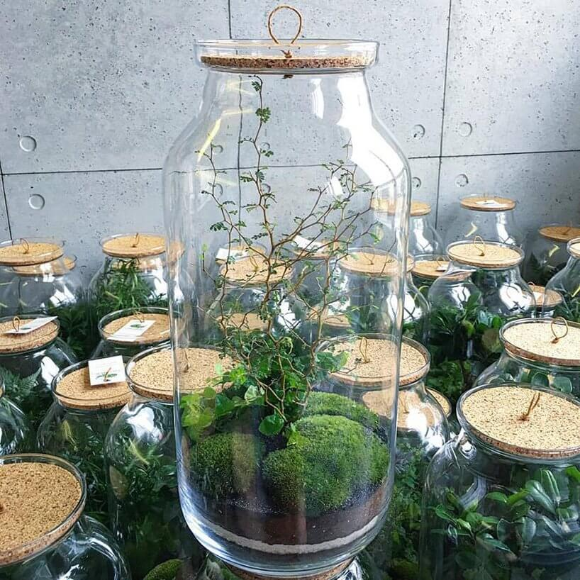 bonsai zdrobnymi liśćmi wsłoiku