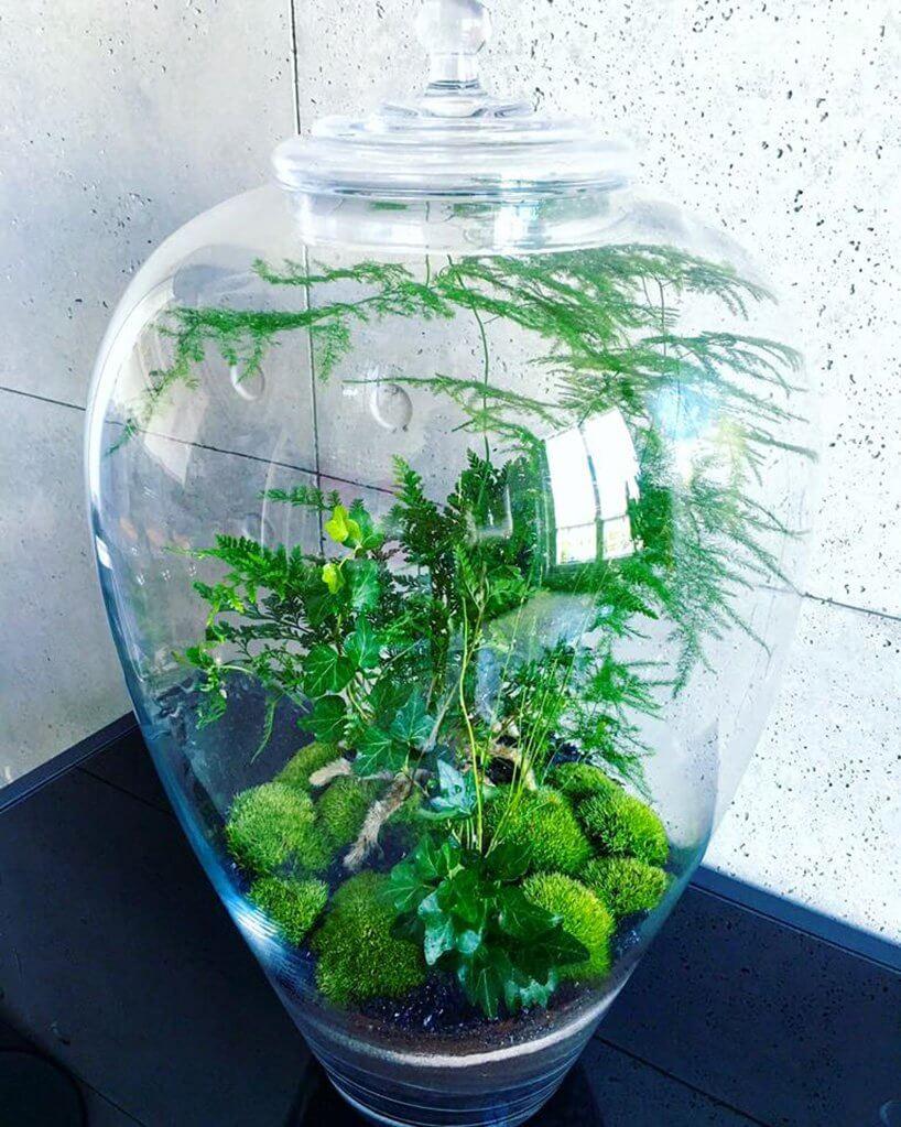 zielone rośliny wsłoiku