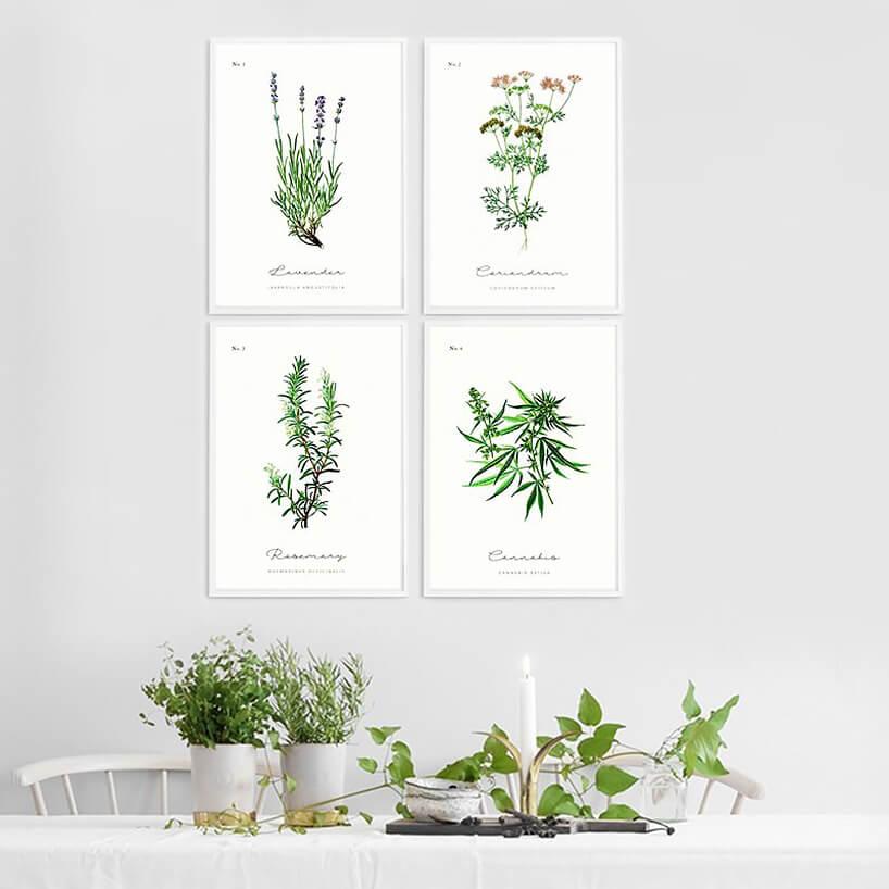 różne rośliny wbiałych doniczkach na tle obrazków roślin