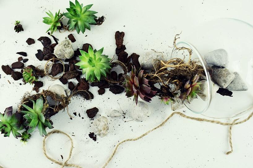 małe rośliny przygotowane do wsadzenia wsłoju
