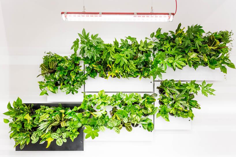 wiele zielonych roślin na szarych płytach