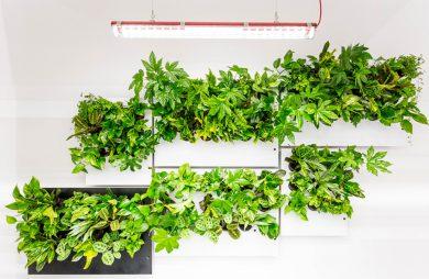 wiele zielonych roślin na szarych płytach pod lampą