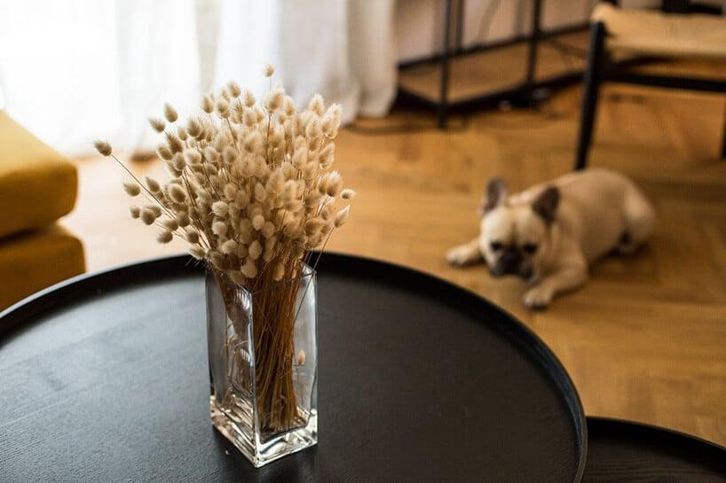 czarna okrągła taca zwazonem zjasną rośliną oraz pies leżący na drewnianej podłodze