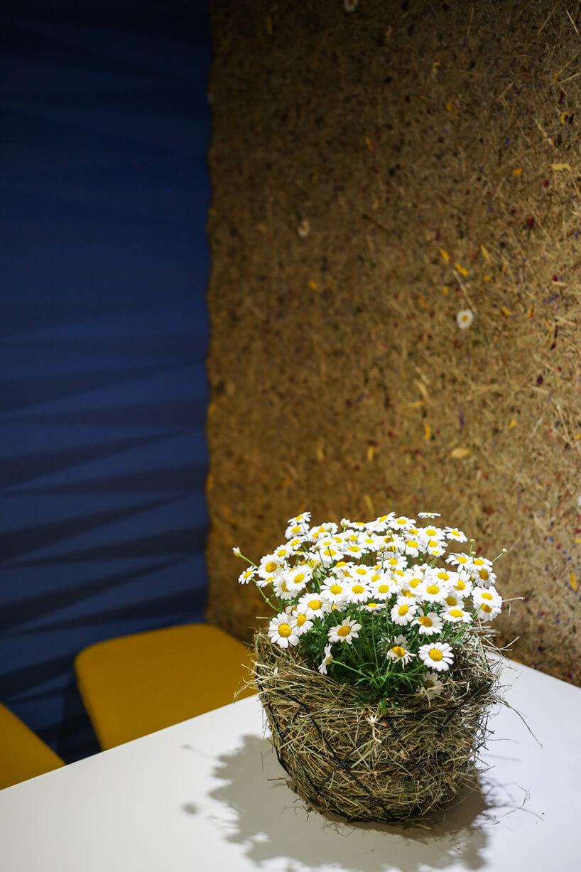 kwiaty rumianku wosłonce zsiana na białym stole