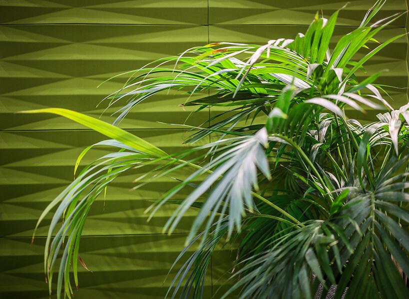 duża zielona roślina na tle zielonej ścianki akustycznej VANK