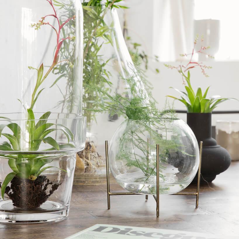 szklane osłony na rośliny