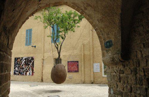 wiszące drzewo w Izraelu