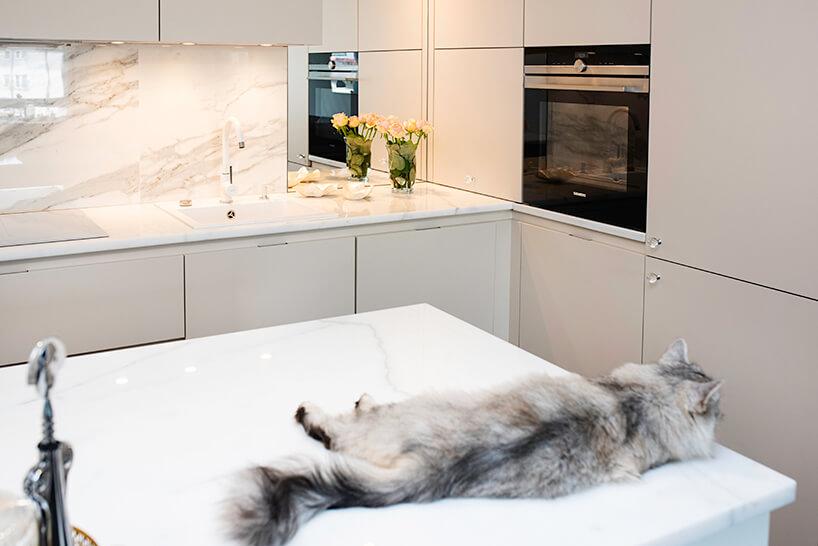 kuchnia premium od ernestrust kot leżący na kamiennym blacie wyspy kuchennej wjasnej kuchni