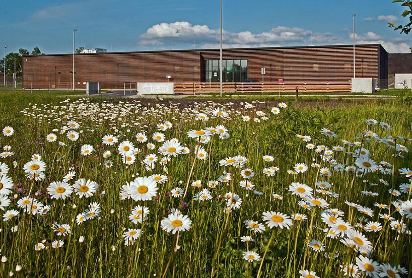 teren brązowego budynku zzieloną trawą oraz zbiało żółtymi kwiatami