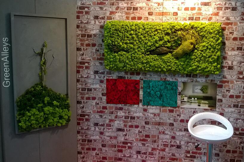 zielony mech przy ścianie zcegieł