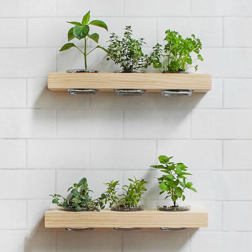 dwie drewniane małe półki na białej ścianie zziołami