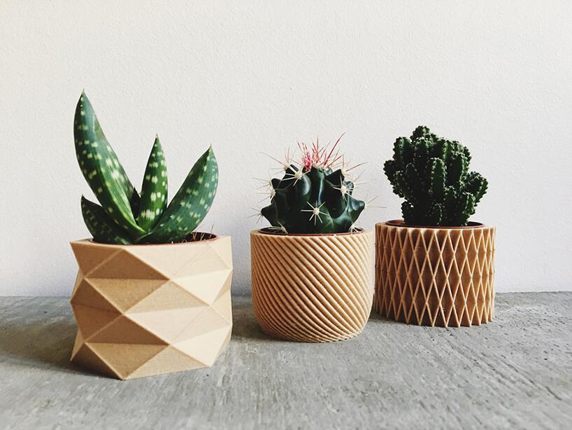 kaktusy wosłonkach 3D