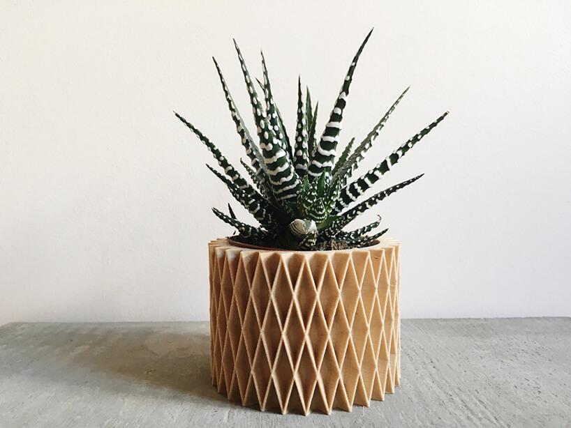 kaktus wosłonce zdruku 3D